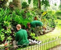 assunzioni di giardinieri